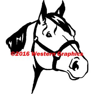 50-horse-head