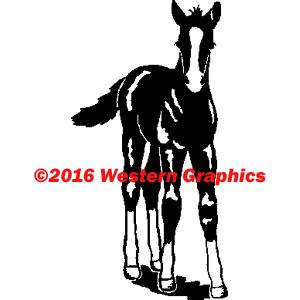 71-foal